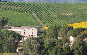 La région de Montefalco, en Ombrie, est aussi «collinaire», comme en Toscane.