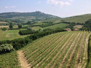 Le vignoble de la famille Massucco, dans le repli des coteaux du Roero.