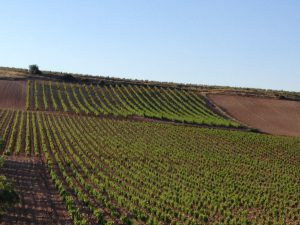 site_rioja6_montesa