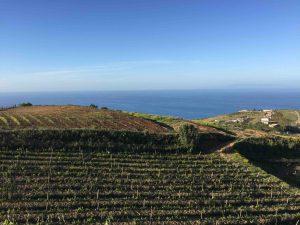 Le vignoble de Casematte, au nord, près de Messine.