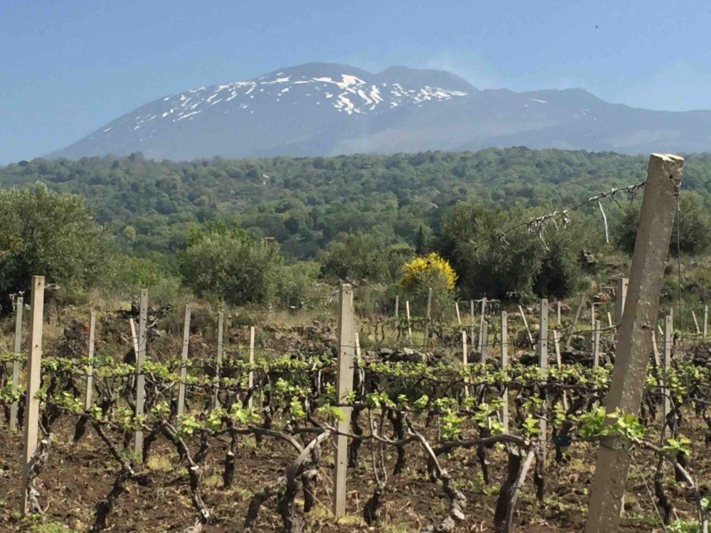 La Sicile, l'île aux trésors blancs