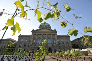 Le 15 juin, les vignerons de «Féchy, vignoble classé» ont planté 400 pieds de chasselas pour un jour devant le Palais Fédéral à Berne.