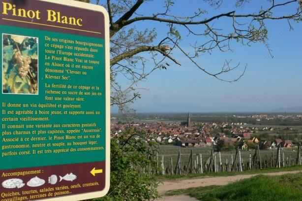 L'Alsace, c'est d'abord des vins de cépages... blancs (photo thomasvino).