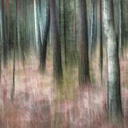 Tankar kring en bild #25 – Kvällsljus i skogen