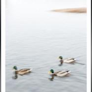 Tankar kring en bild #32 – Fåglar i oskärpa