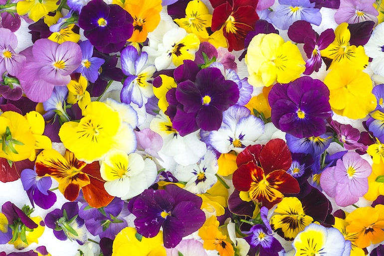Edible Flowers Guide Thompson Morgan
