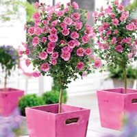 top 10 plants for patios thompson