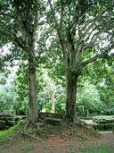 โบราณสถานสระมรกต-ปราจีนบุรี-7