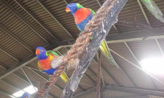 TWYCROSS ZOO – TUESDAY 23RD FEBRUARY 2016