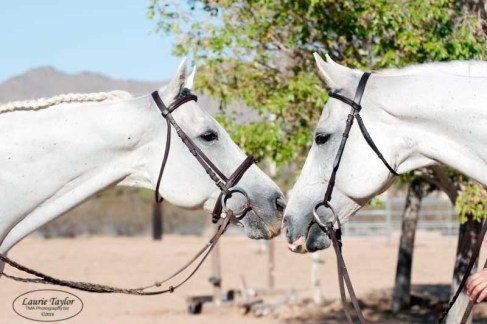 Horses and the retraining services provided are observed on inspections.