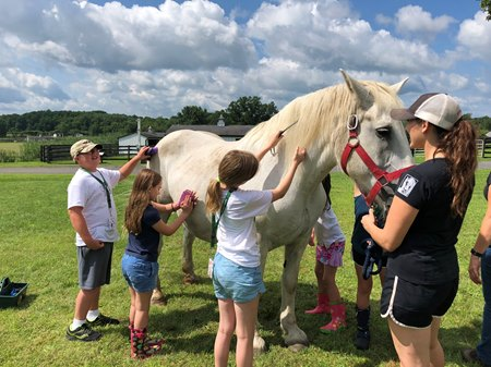 students groom a horse at Equine Advocates