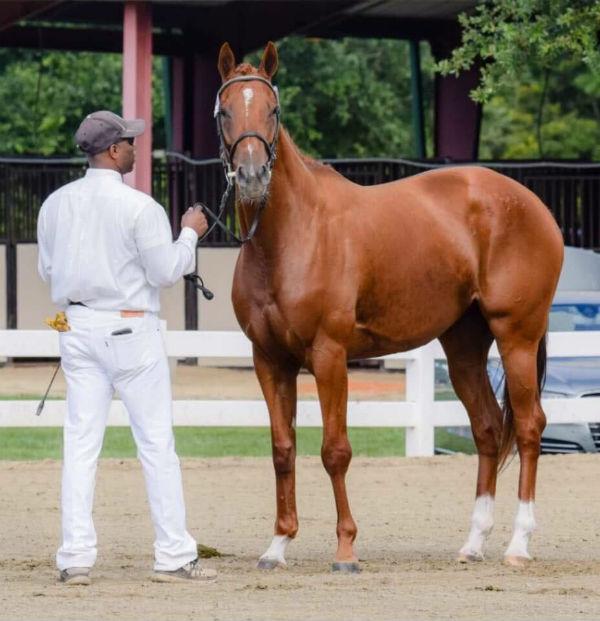 zenna midatlantic horse rescue