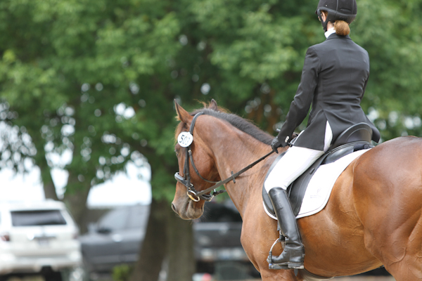 dressage horse at horse show