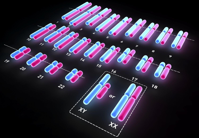 How Chromosomes Determine