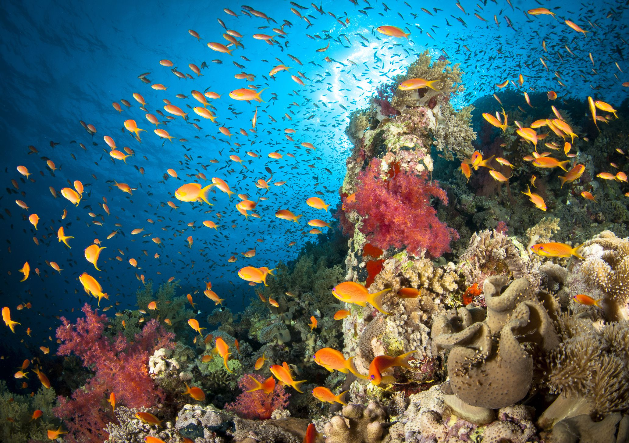 Facts About The Ocean As A Marine Life Habitat