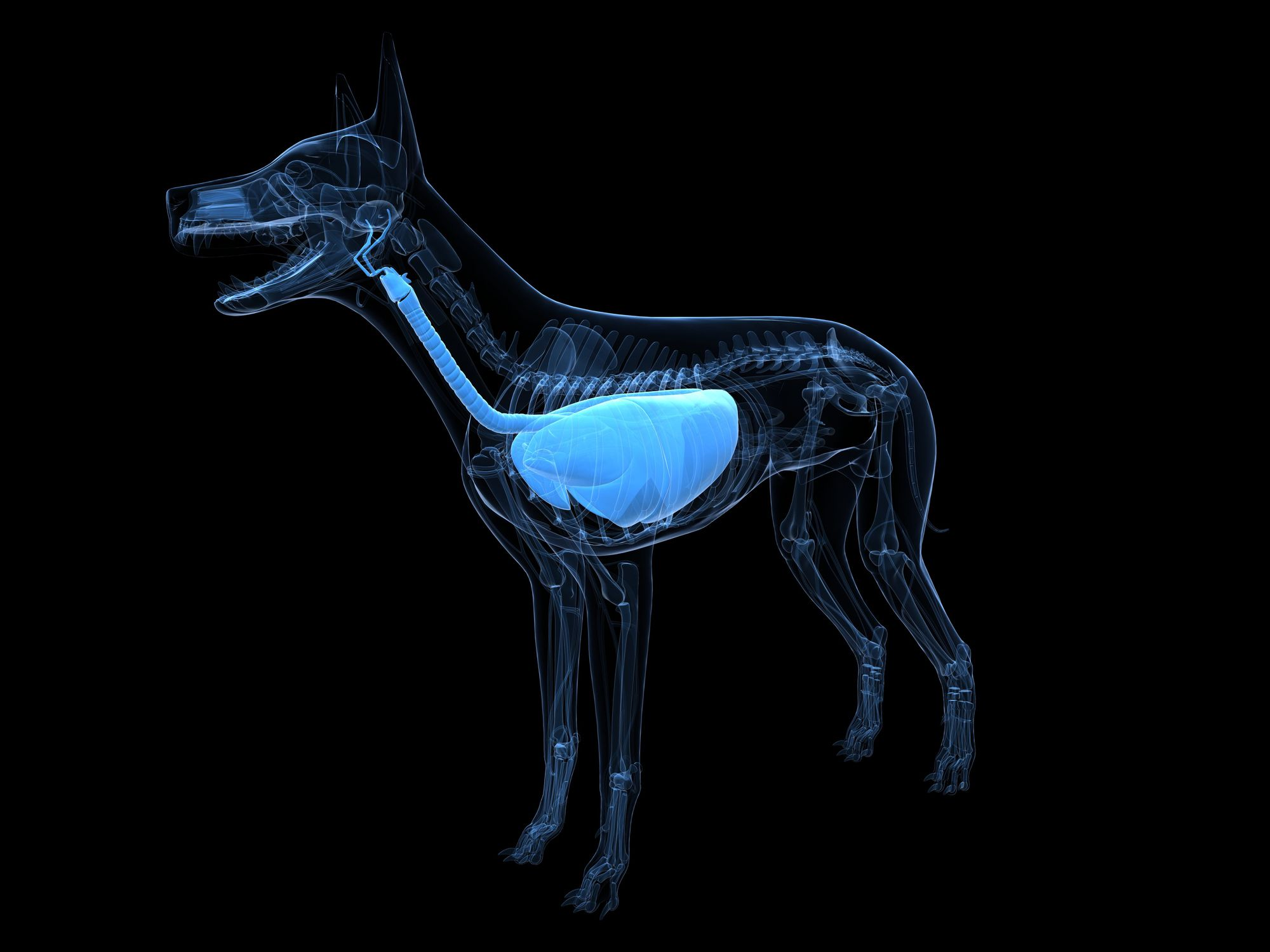The 12 Animal Organ Systems And Their Functions