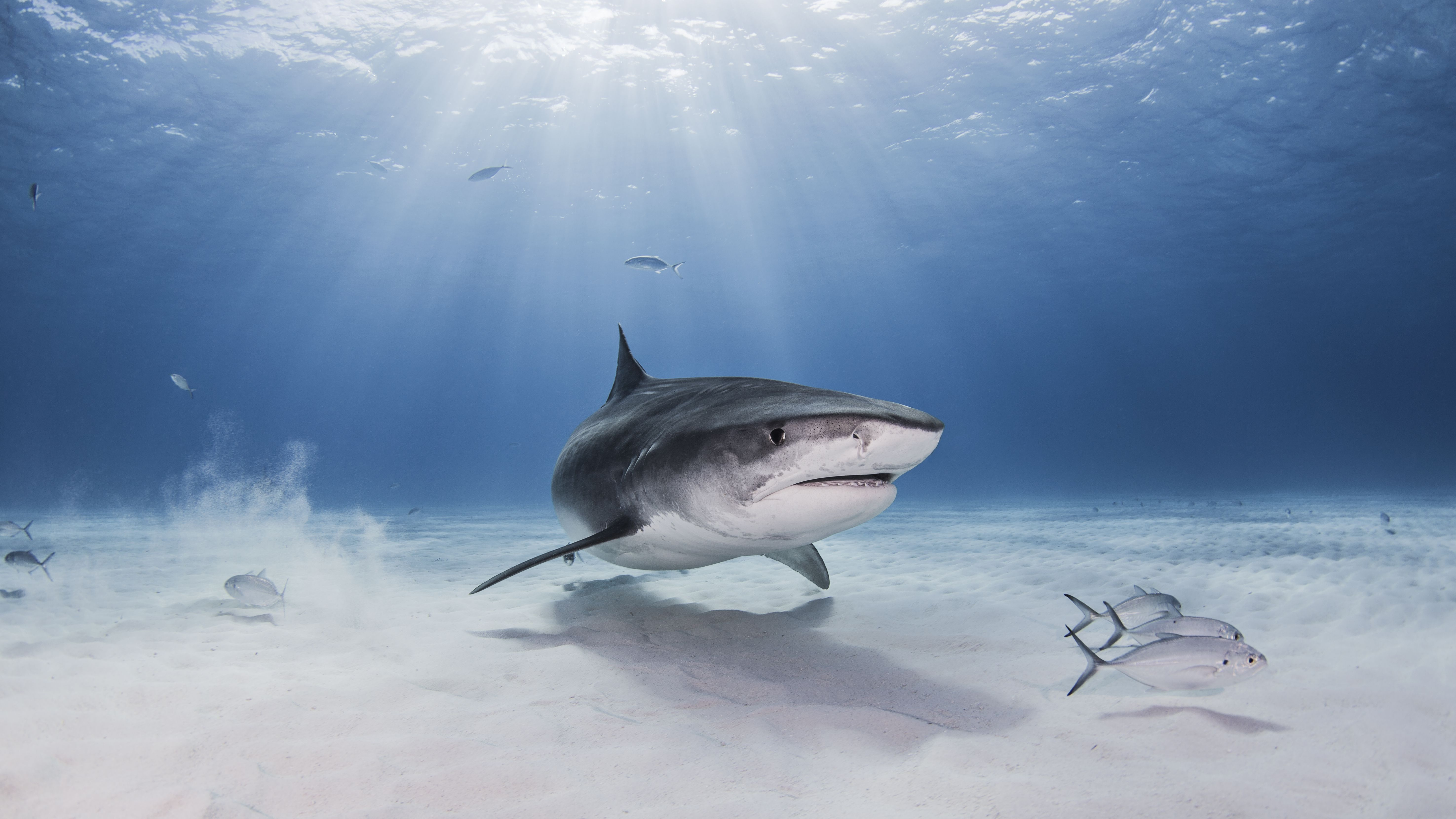 Shark Wordsearch Vocabulary Crossword And More