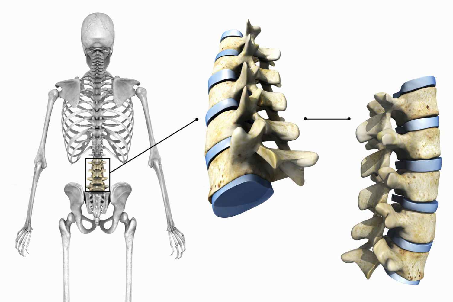 The 3 Types Of Joints In The Body