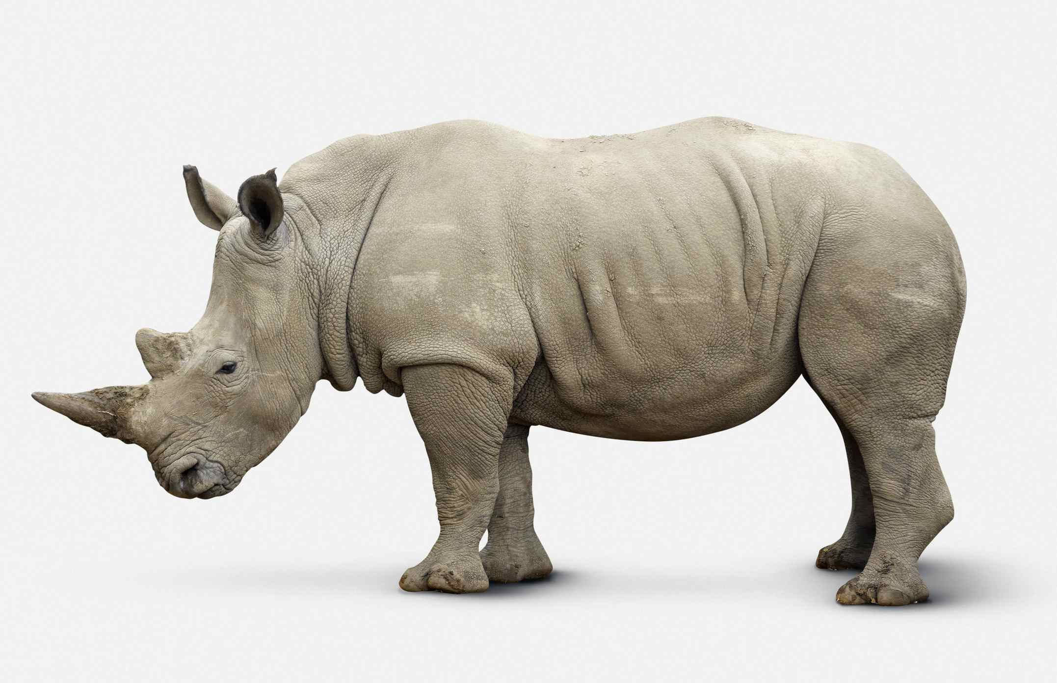 10 Facts About Rhinoceroses
