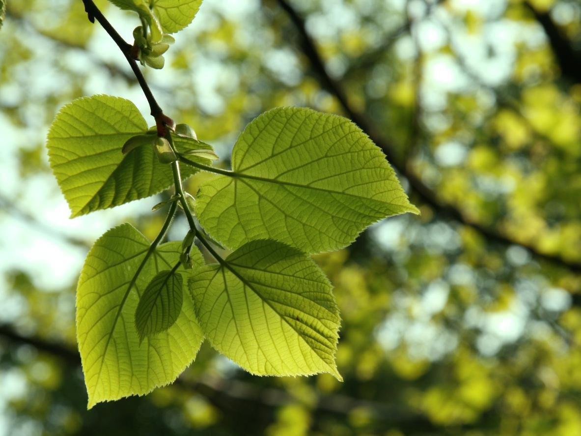 How To Identify Types Of Trees In North America
