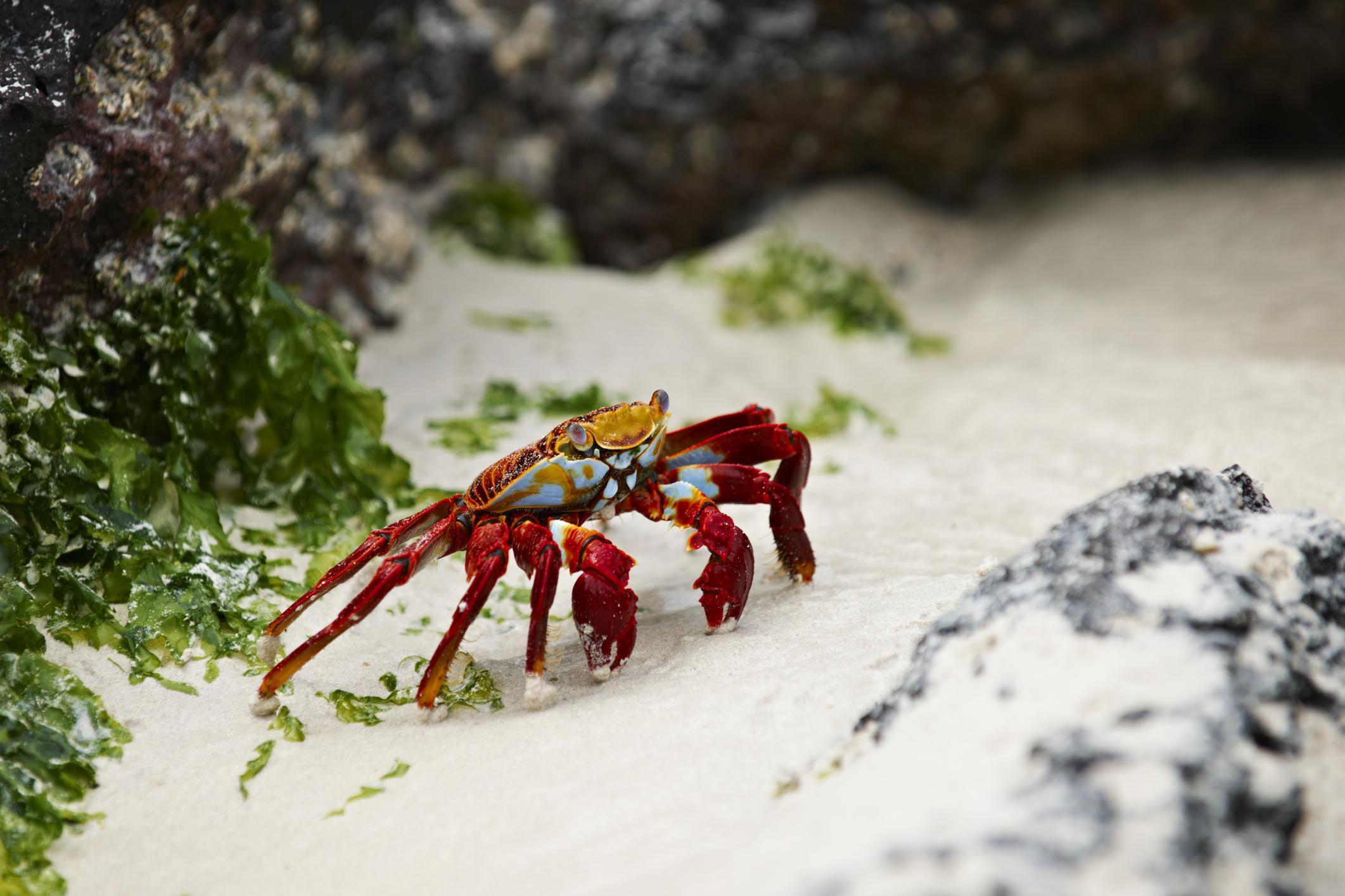 Crustaceans Species Characteristics Andt