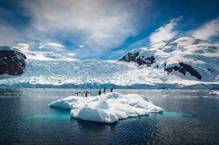 Penguins Relax on a Small Iceberg, Antarctica