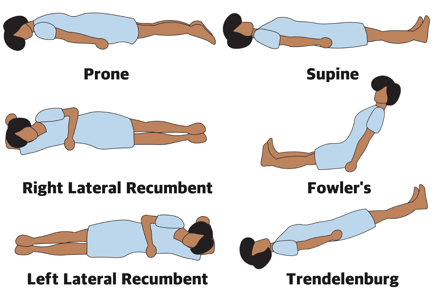 Anatomical Position Definitions And Illustrations