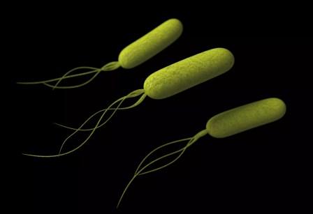 Bactérias Pseudomonas
