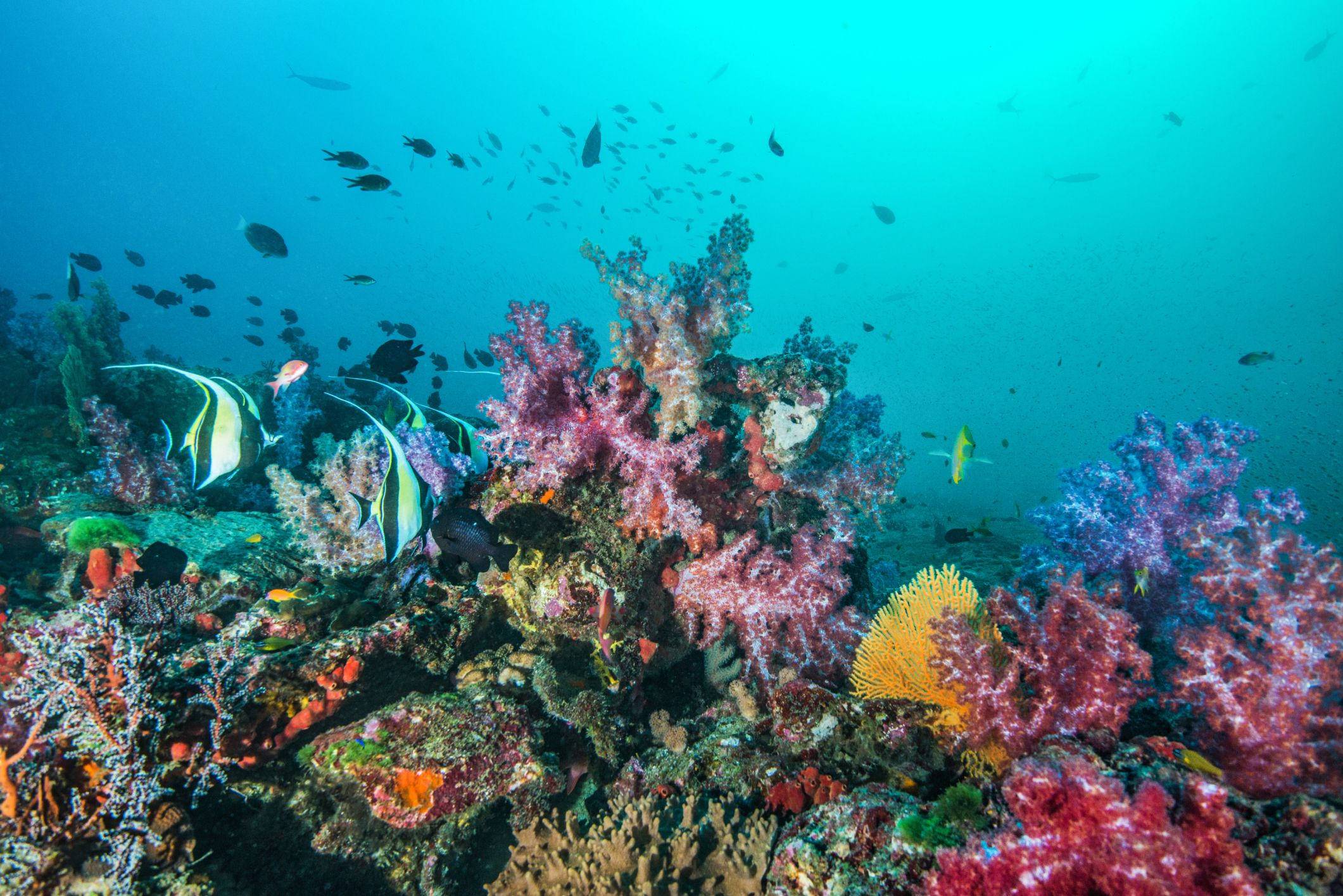 Coral Plant Reefs Life