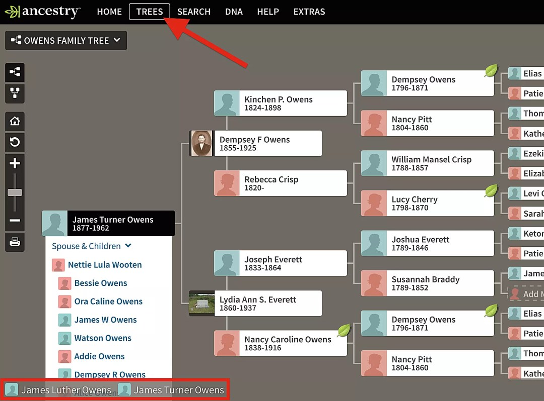 How to navigate pedigree view on an Ancestry Member Tree.