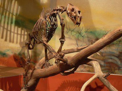 smilodon skeleton on a tree