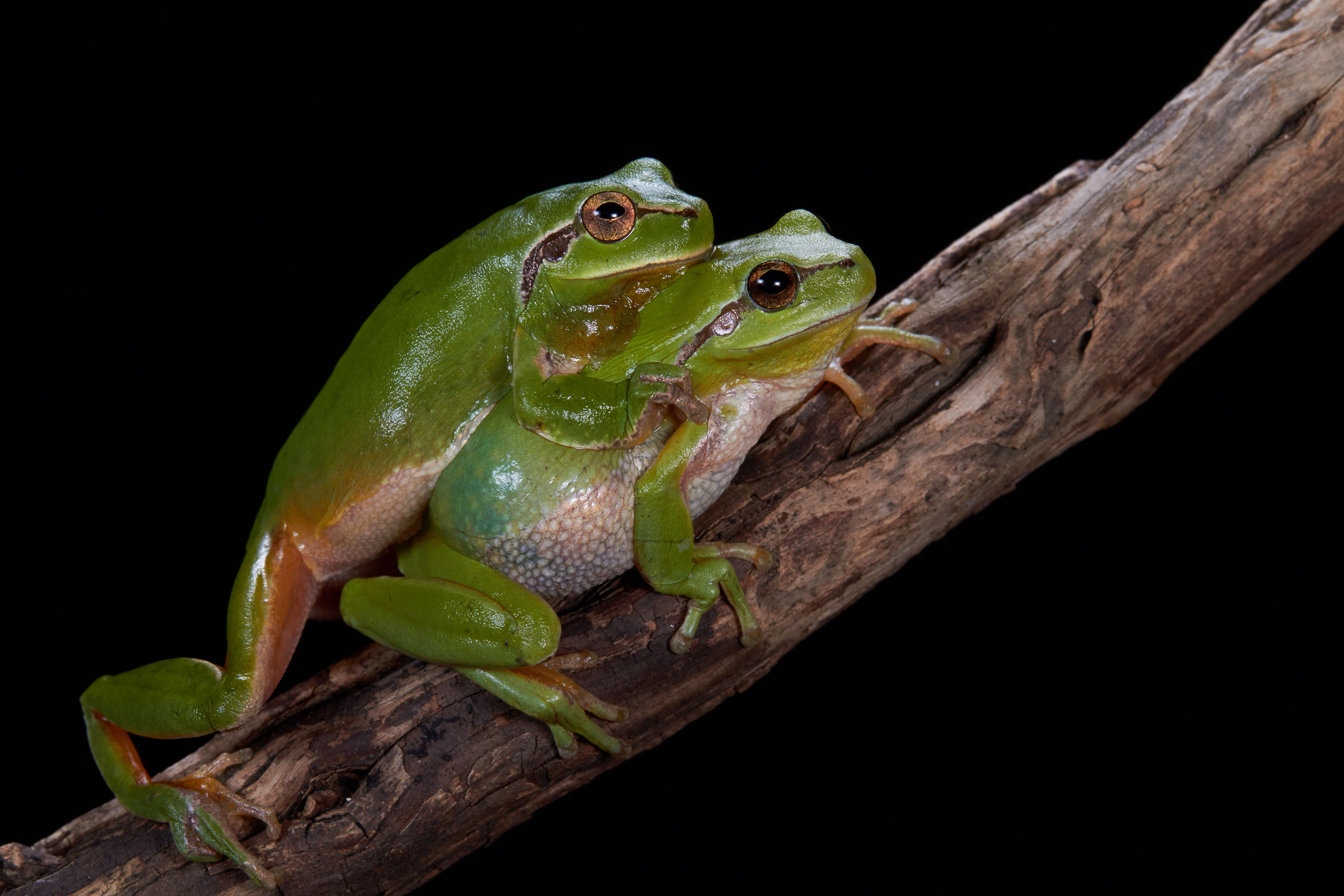 Amphibian Life Cycle Overview