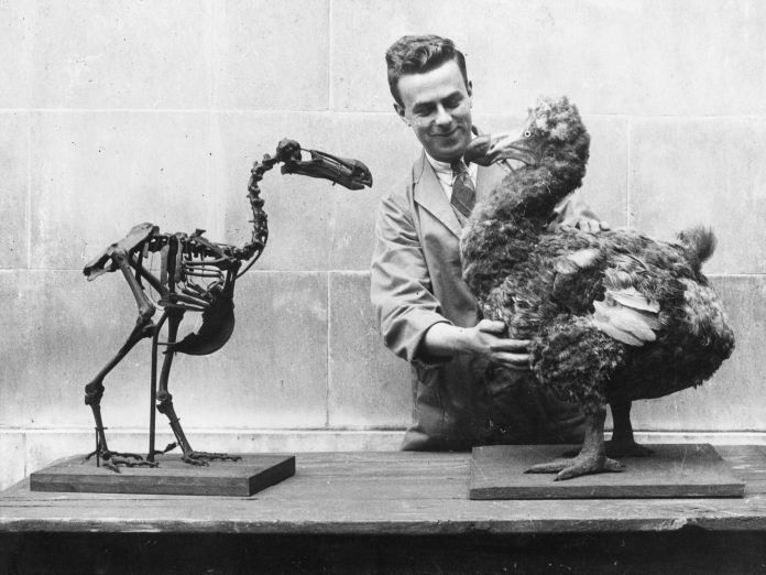 10 Facts About the Dodo Bird