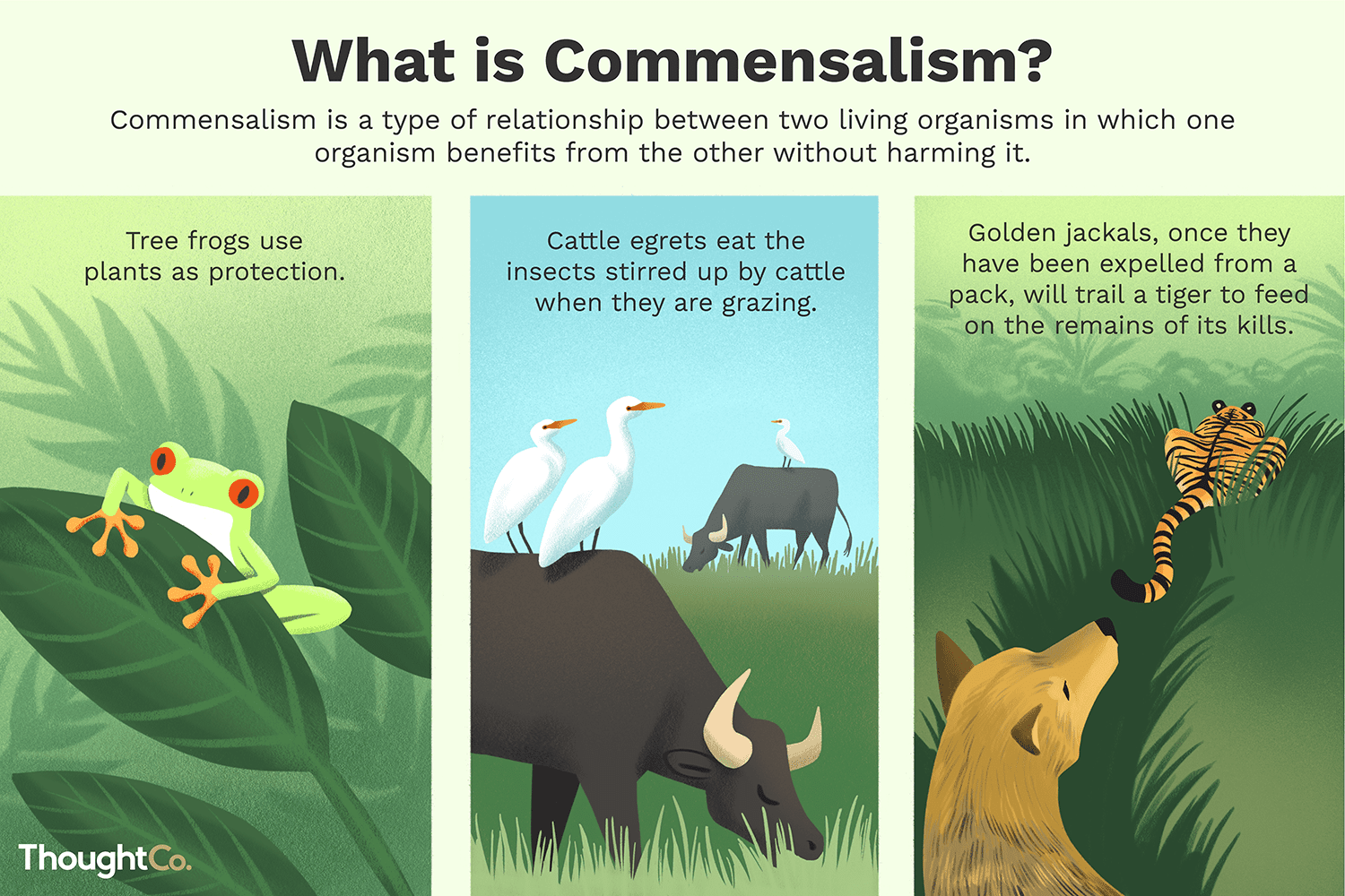 Commensalism Definition Examples And Relationships