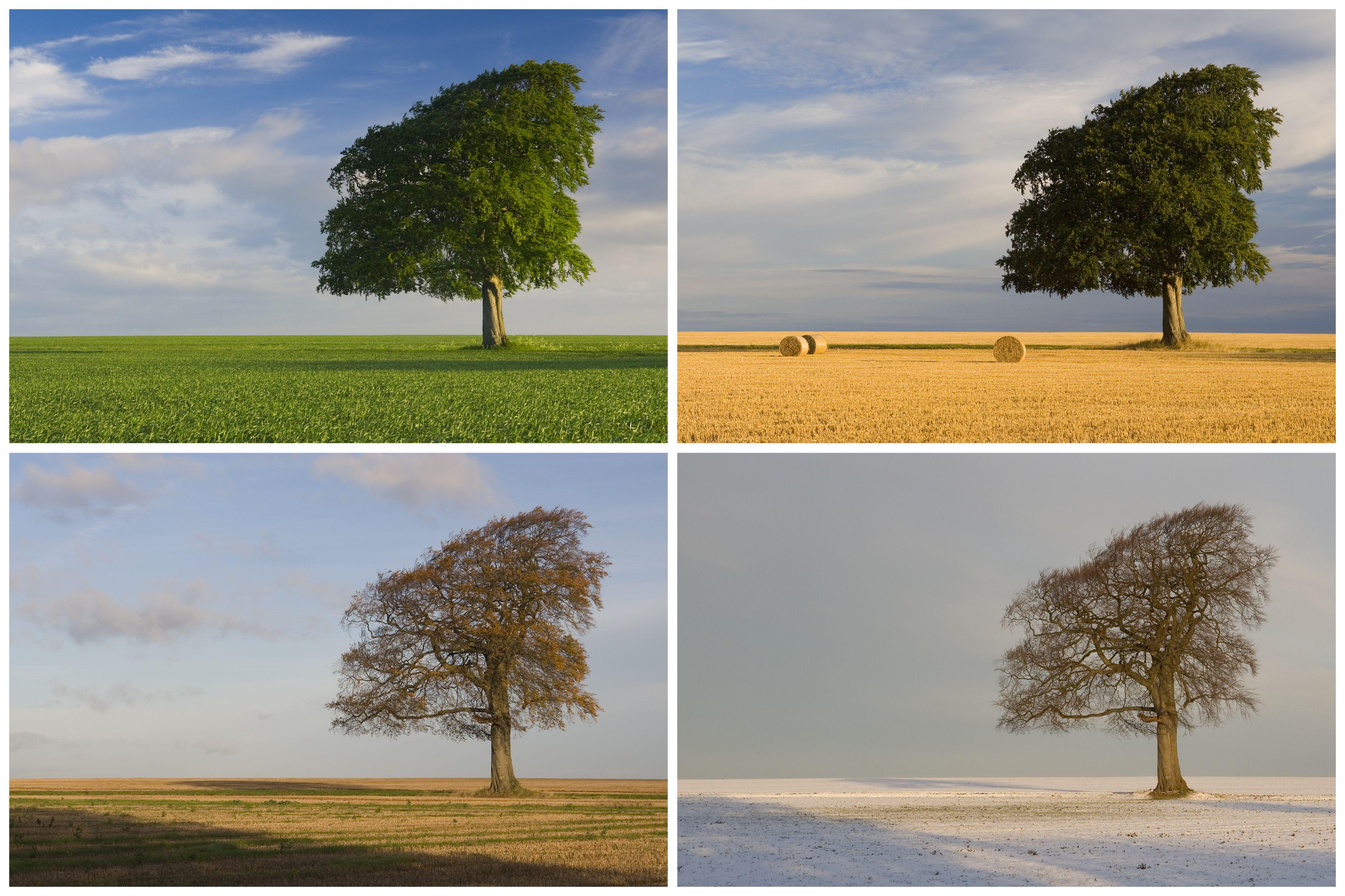 Seasonality The Archaeology Of Changing Seasons