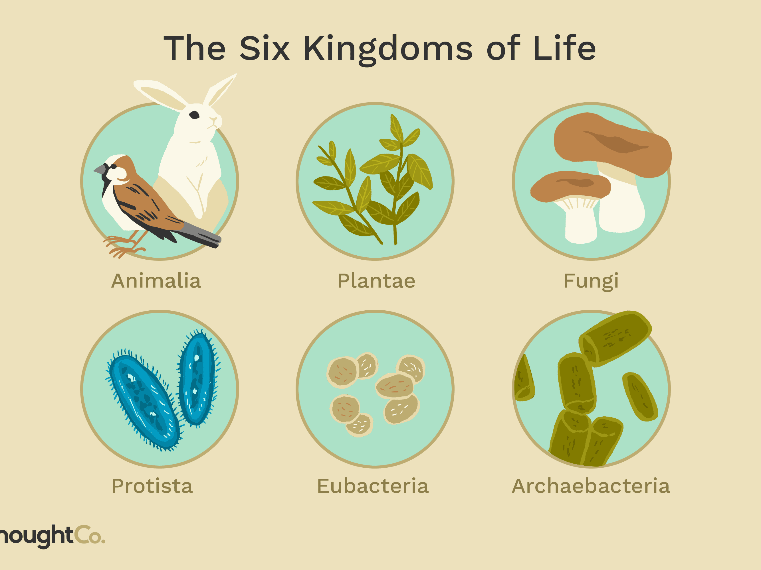 What Kingdom Did The First Organisms On Earth Belong To