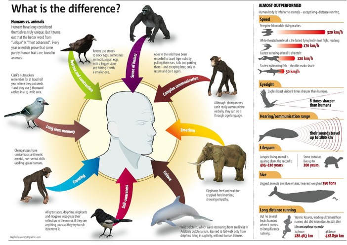 Comparing animal traits to human traits.