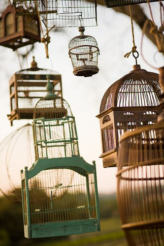 Bird cages are no longer just for birds