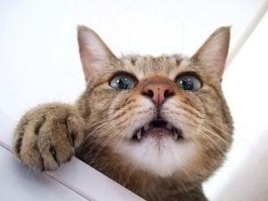 ネコ 見下ろす
