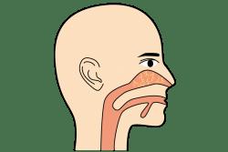 鼻の血管が寒さで収縮する