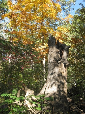 lakeshore-trail-sara-karnes