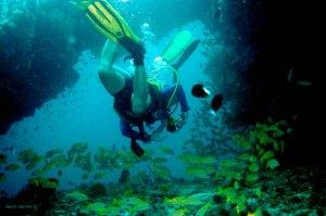 Diving in the Maldives