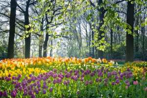 3 Content Marketing Lessons from Planting Flower Bulbs