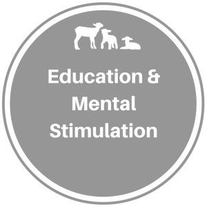 Education/Mental Stimulation