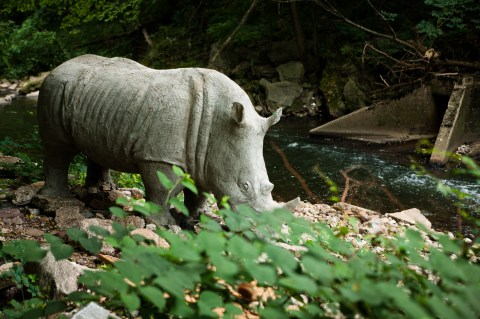 This is what we hoped to find. Photo: http://www.iknowtherhino.com/