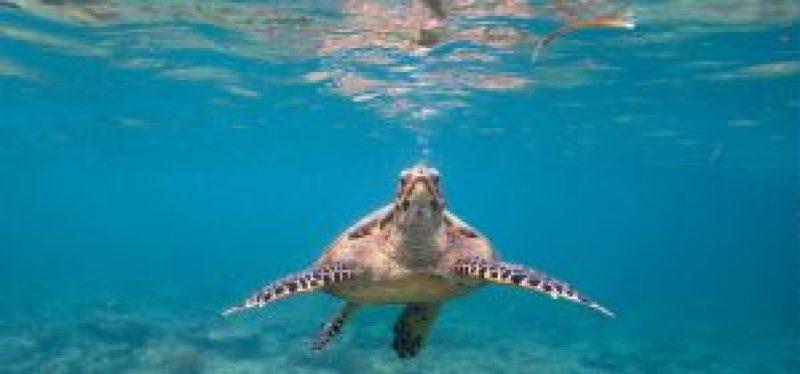 scude-dives-on-gili-islands