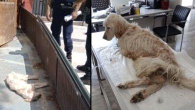 Χαϊδάρι: Κατασχέθηκε σκύλος που κακοποιούταν από τον ιδιοκτήτη του