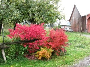 Garden: Burning Bush