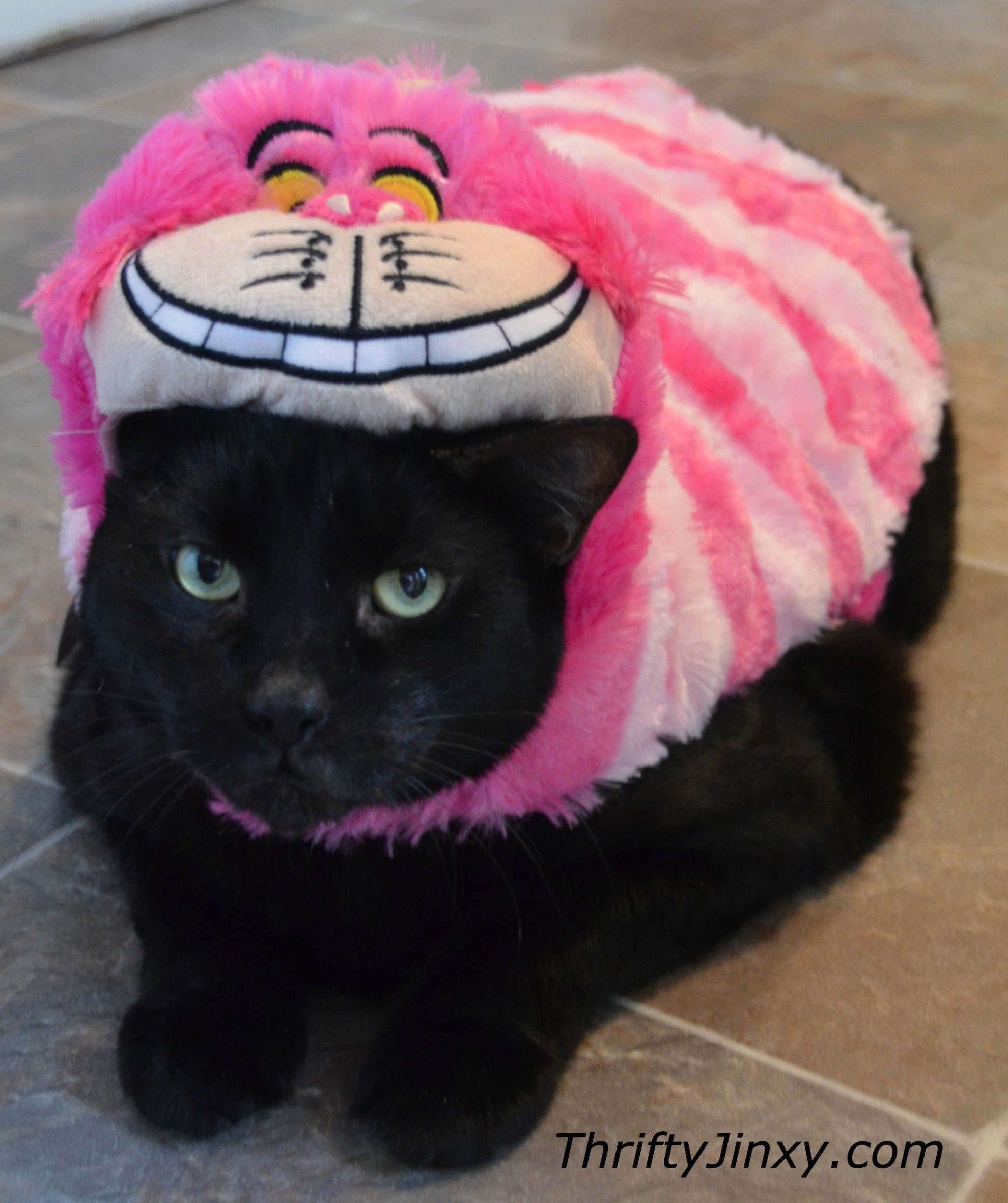 Disney Pet Cheshire Cat Costume