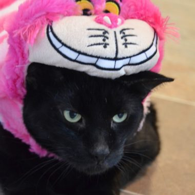 Disney Cheshire Cat Pet Costume
